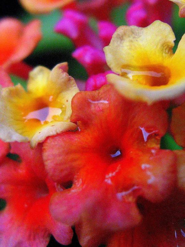 Floral Art Print featuring the photograph Lantana-na-na by Marla McFall