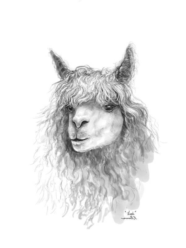 Llama Art Art Print featuring the drawing Lexi by K Llamas