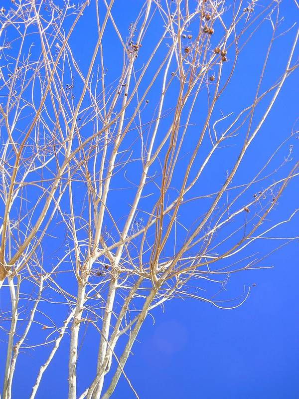 Crape Myrtle Limbs Art Print featuring the photograph Lines Of Nature by Warren Thompson