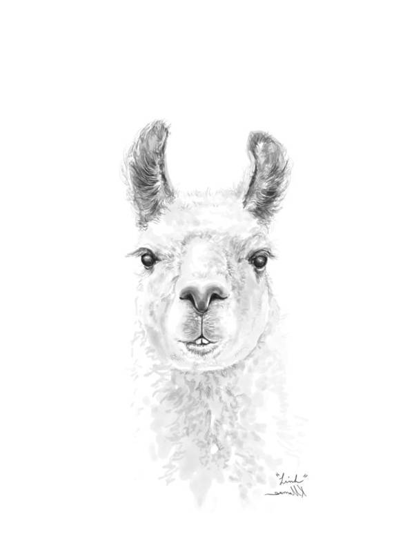 Llama Art Art Print featuring the drawing Linh by K Llamas