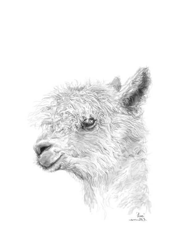 Llama Art Art Print featuring the drawing Lisa by K Llamas