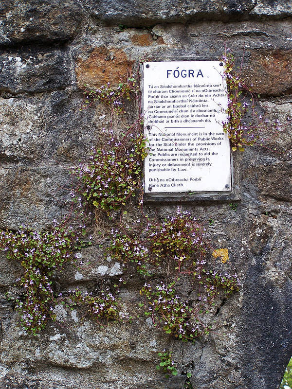 Irish Art Print featuring the photograph Living Wall At Donegal Castle Ireland by Teresa Mucha