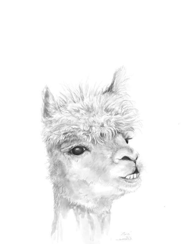 Llama Art Art Print featuring the drawing Marc by K Llamas