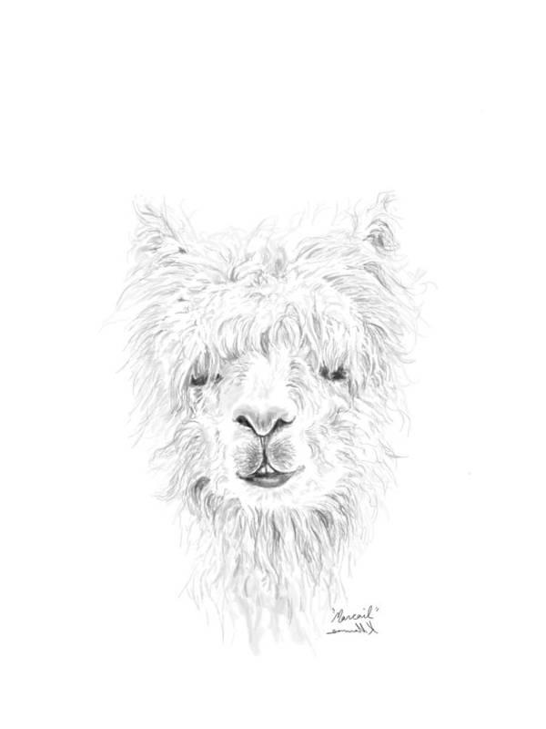Llama Art Art Print featuring the drawing Marcail by K Llamas