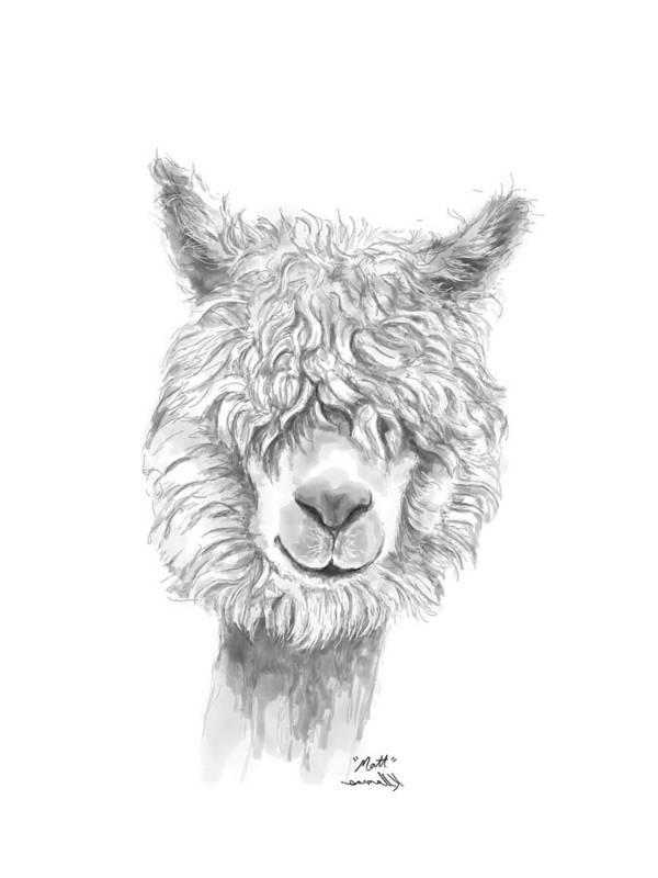 Llama Art Art Print featuring the drawing Matt by K Llamas