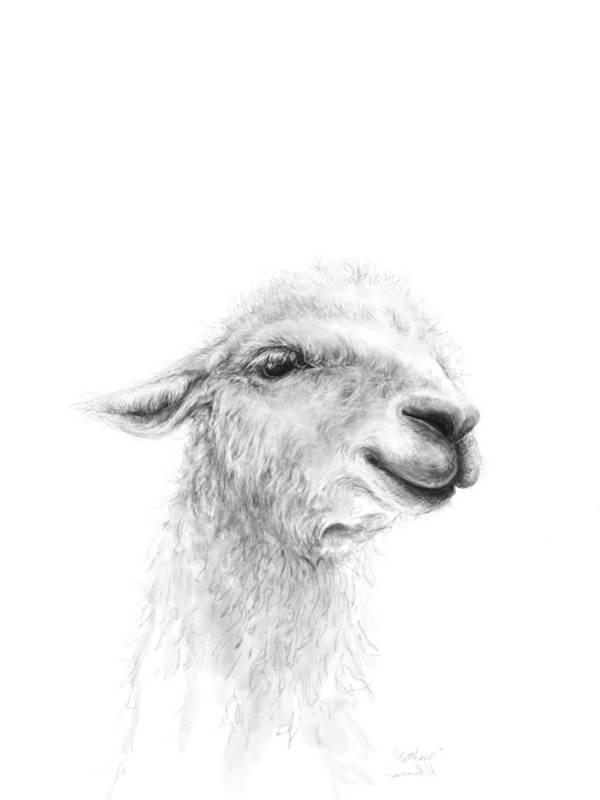 Llama Art Art Print featuring the drawing Matthew by K Llamas