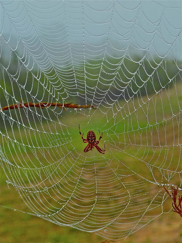 Spider Art Print featuring the photograph Meadow Macrame by Diana Hatcher