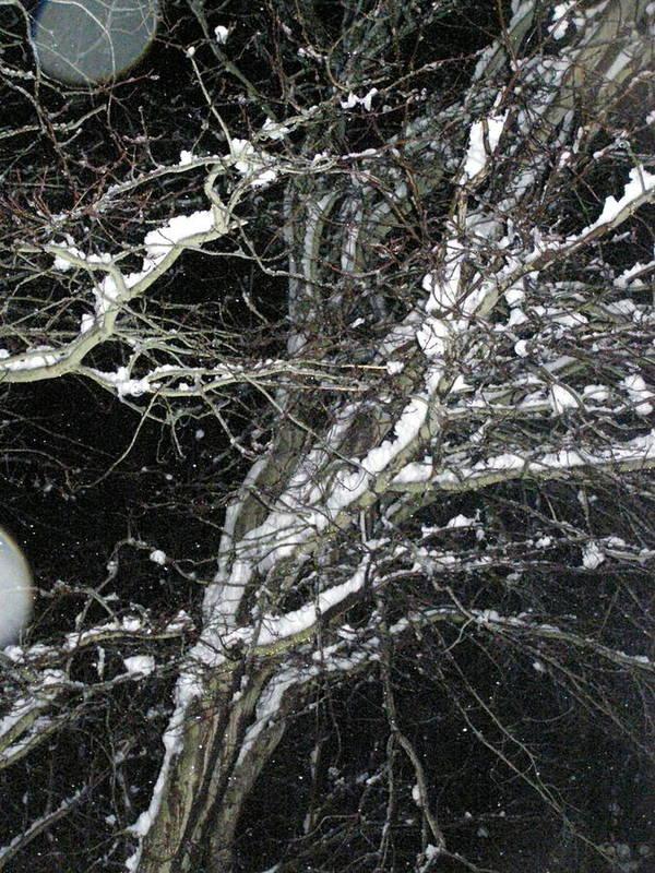 Winter Art Print featuring the photograph Midnight Snow 13 by Christine Sullivan Cuozzo