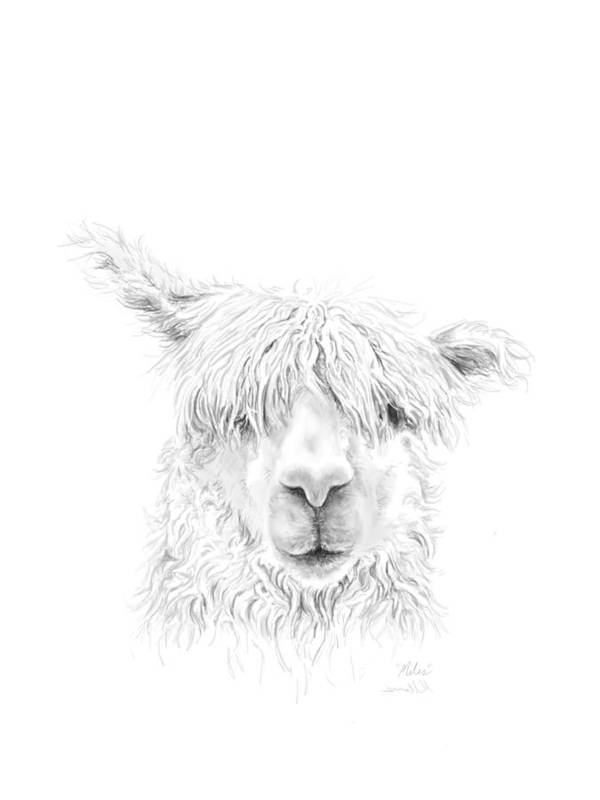 Llama Art Art Print featuring the drawing Miles by K Llamas