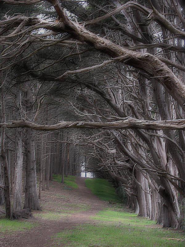 Landscape Art Print featuring the photograph Moss Beach Trees 4191 by Karen W Meyer