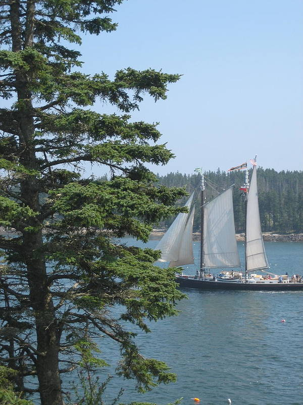 Ship Art Print featuring the photograph Nearing Burnt Coat Harbor by Debra LePage