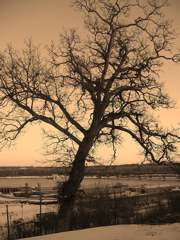 Crooked Tree Art Print featuring the photograph Old Crooked Tree Overlooking Mississippi River by Goldie Pierce