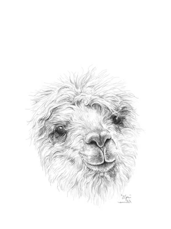 Llama Art Art Print featuring the drawing Olga by K Llamas