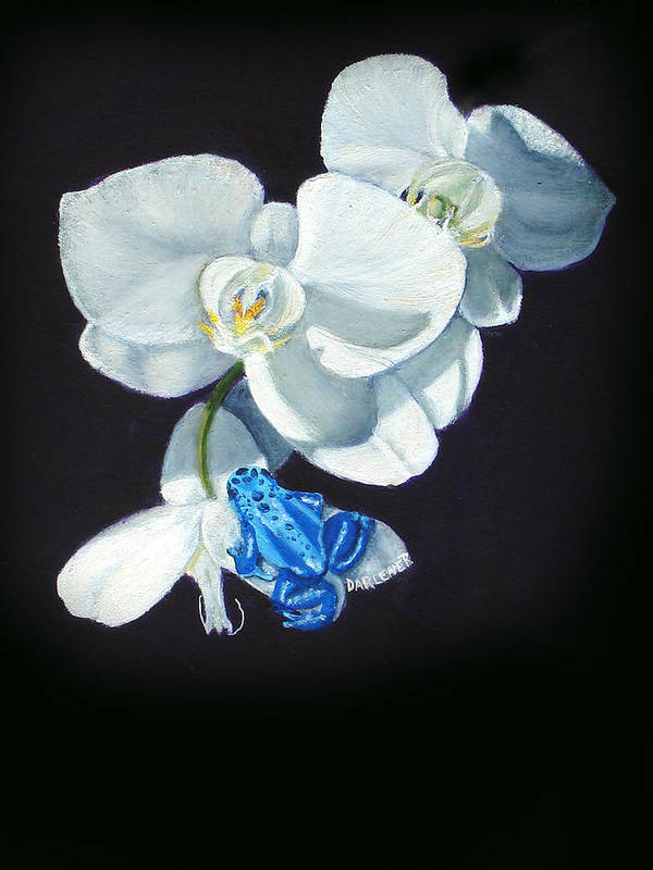 Blue Morph Frog Art Print featuring the painting Orchid Treat by Darlene Green