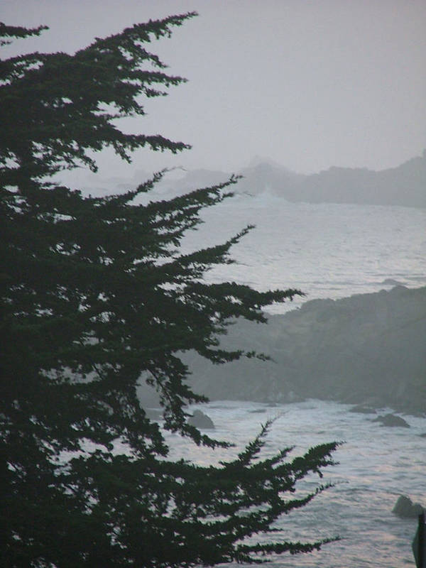 Sea Scape Art Print featuring the photograph Pacific Grove Early Am by Donna Thomas