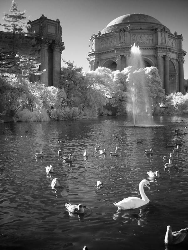 Palace Of Fine Arts Art Print featuring the photograph Palace Of Fine Arts In San Francisco California by Rikka-chan