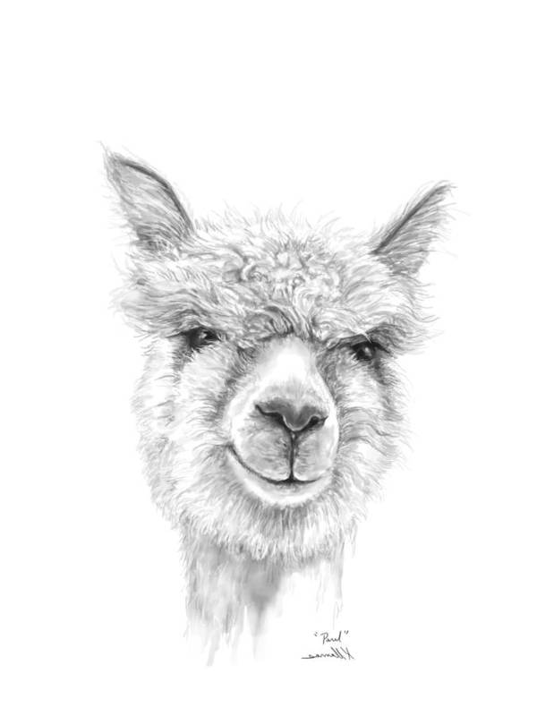 Llama Art Art Print featuring the drawing Paul by K Llamas