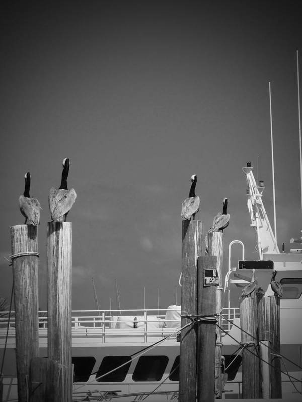 Pelicans Art Print featuring the photograph Pelicans Perched By Sailboat by Megan Verzoni
