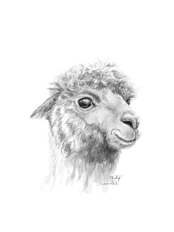 Llama Art Art Print featuring the drawing Phillip by K Llamas