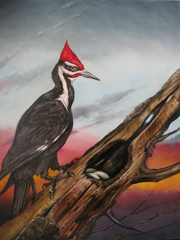 Bird Art Print featuring the painting Pileated Woodpecker by Martin Katon