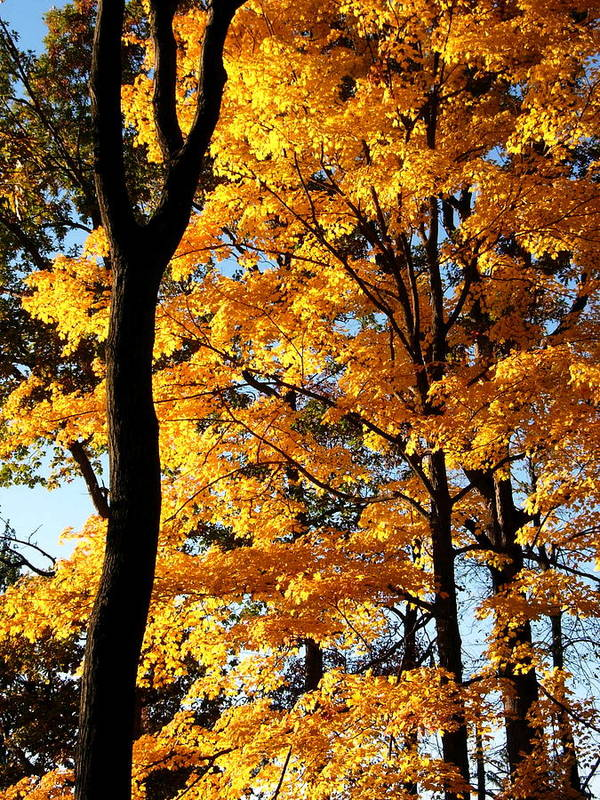 Autumn Art Print featuring the photograph Pitchfork In Autumn Light by Scott Mosel
