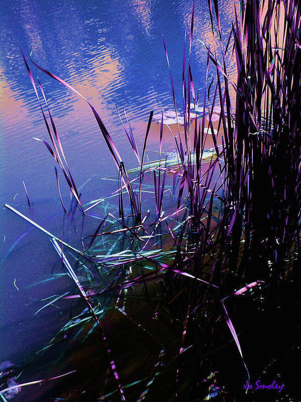Reeds In Pond At Sunset Art Print featuring the photograph Pond Reeds At Sunset by Joanne Smoley