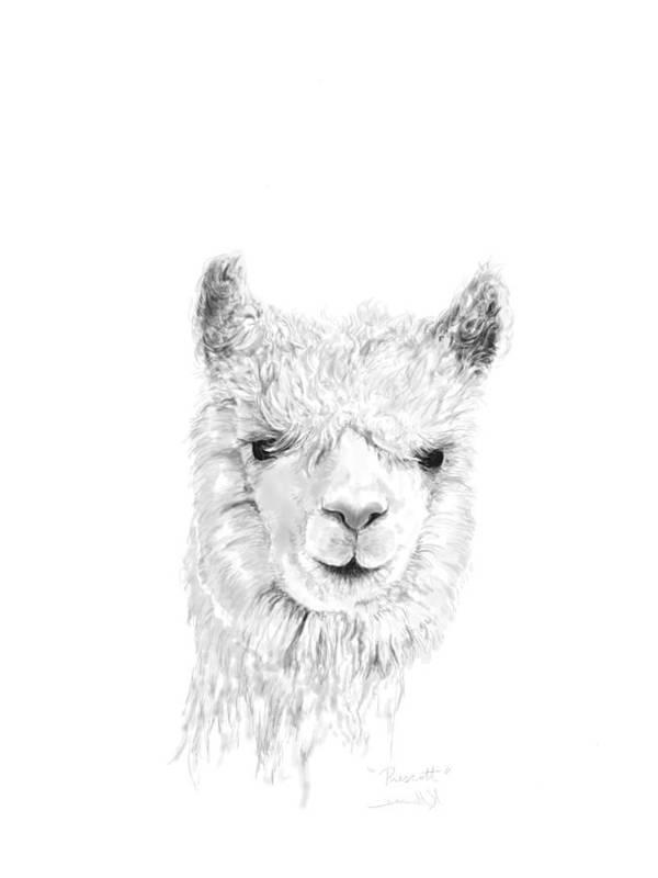 Llama Art Art Print featuring the drawing Prescott by K Llamas