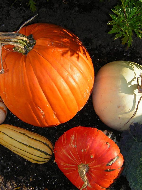 Pumpkins Art Print featuring the photograph Pumpkin by Heather Weikel