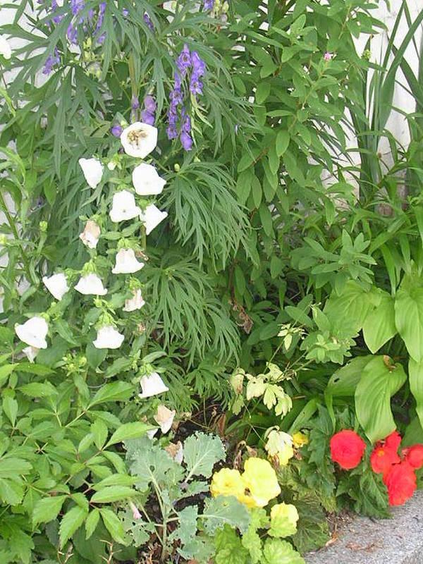 Garden Art Print featuring the photograph Quebec Garden 2 by Nancy Ferrier