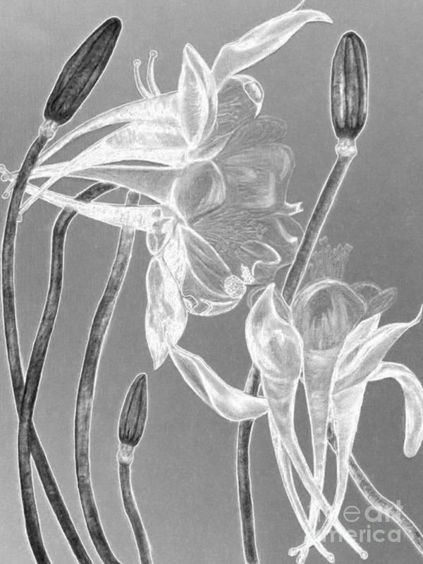 Florals Art Print featuring the digital art Red Crimson Star by Brenda L Spencer