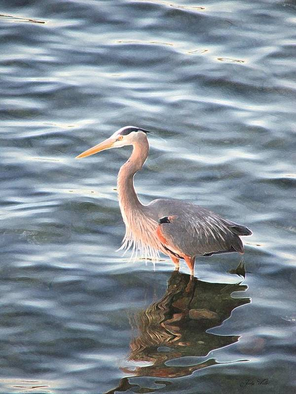 Bird Art Print featuring the photograph Reflections In The Water by Judy Waller