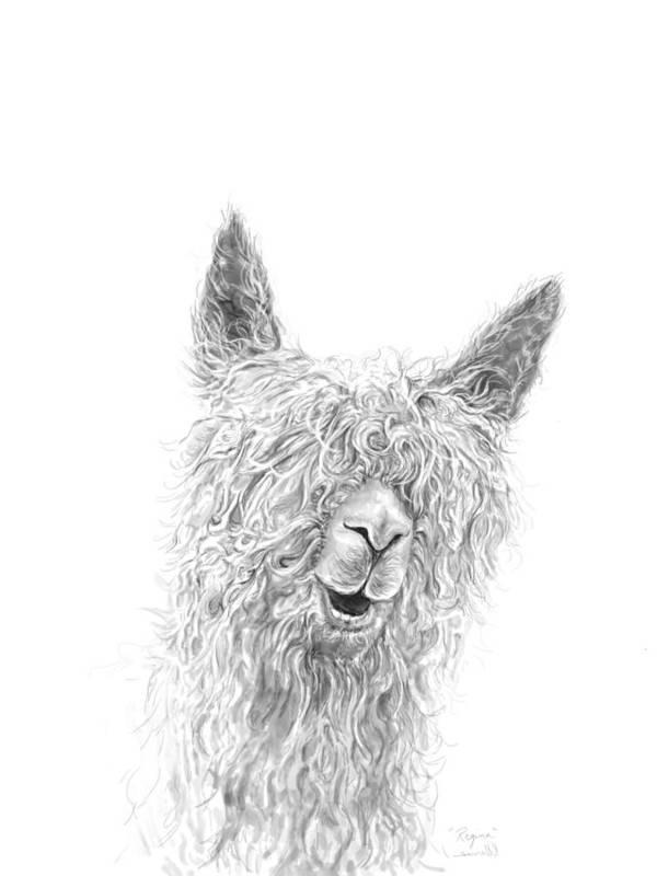 Llama Art Art Print featuring the drawing Regina by K Llamas