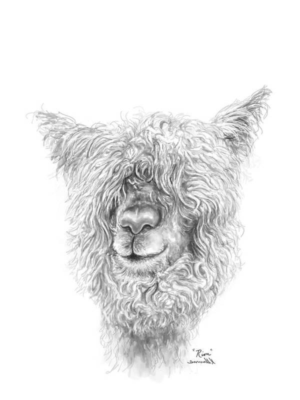 Llama Art Art Print featuring the drawing Rion by K Llamas