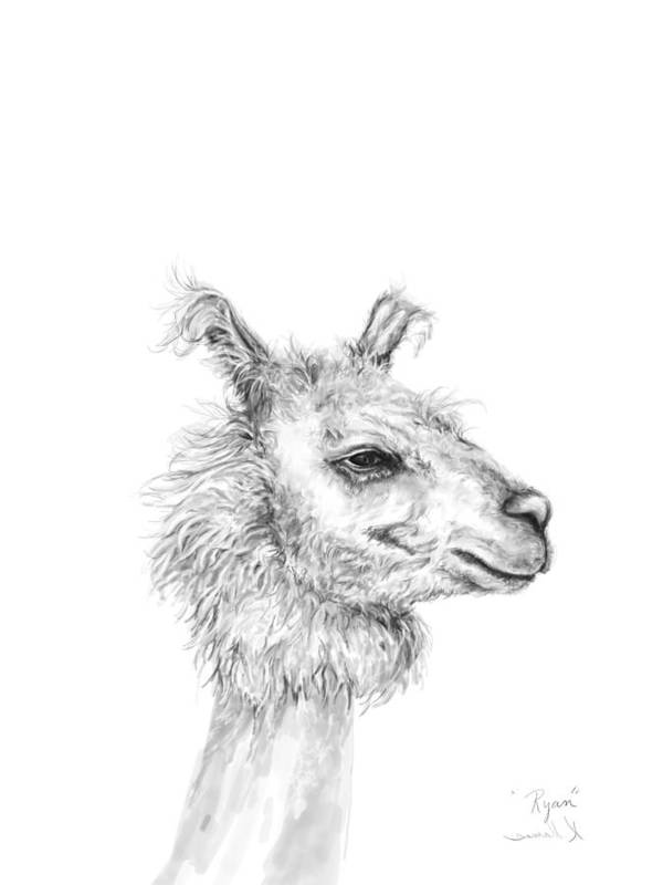 Llama Art Art Print featuring the drawing Ryan by K Llamas
