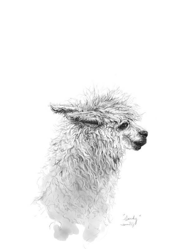 Llama Art Art Print featuring the drawing Sandy by K Llamas
