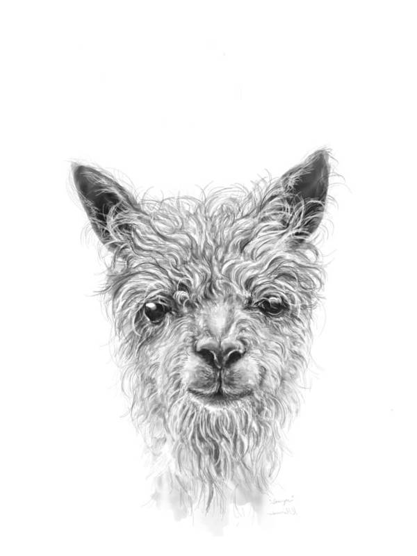 Llama Art Art Print featuring the drawing Sawyer by K Llamas