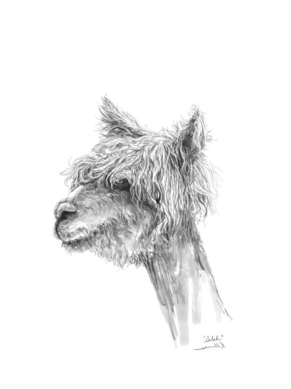 Llama Art Art Print featuring the drawing Selah by K Llamas