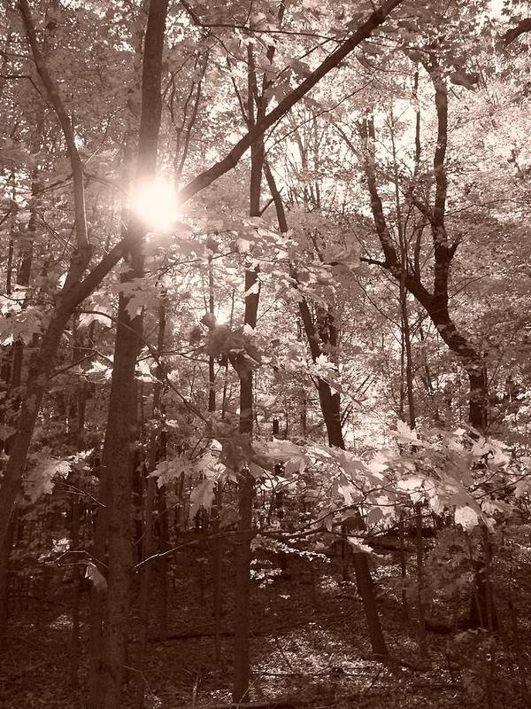 Sepia Art Print featuring the photograph Sepia Forest by Erica Carlson