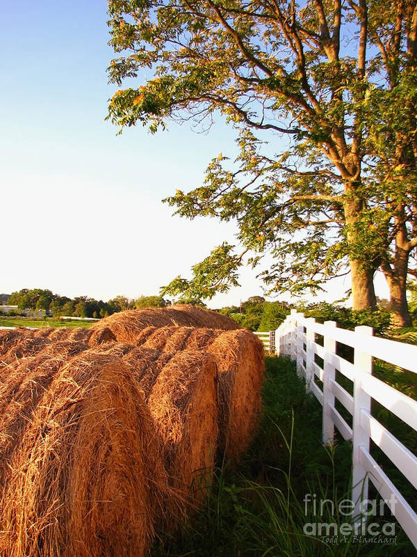 Landscape Art Print featuring the photograph Side-by-side by Todd A Blanchard