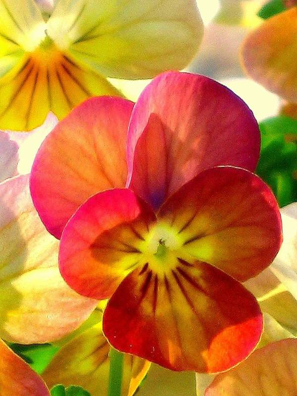 Floral Art Print featuring the photograph Spring Has Sprung by Marla McFall