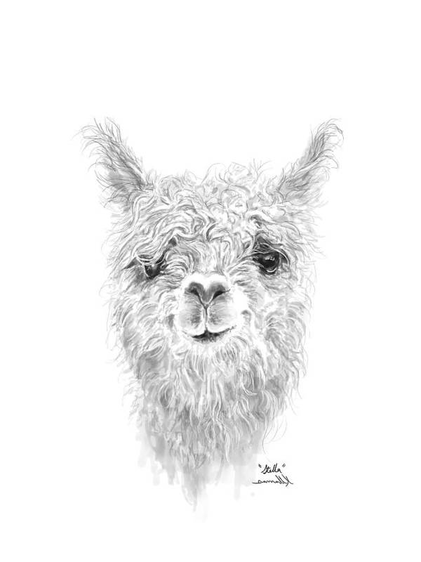 Llama Art Art Print featuring the drawing Stella by K Llamas
