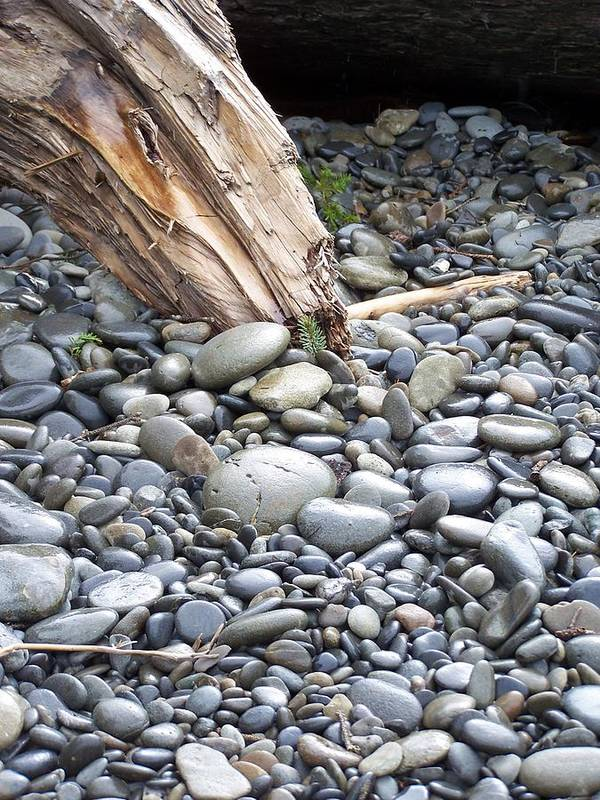 Stones Art Print featuring the photograph Stones by Gene Ritchhart