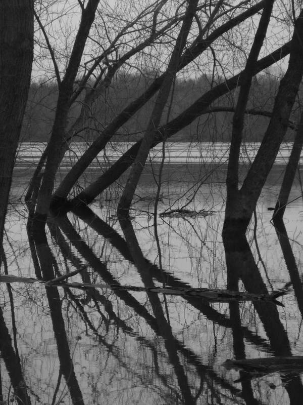 River Art Print featuring the photograph Tangled Reflections by Russ Harriger