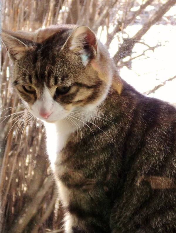 Photograph Cats Art Print featuring the photograph The Intruder by Janice Robertson