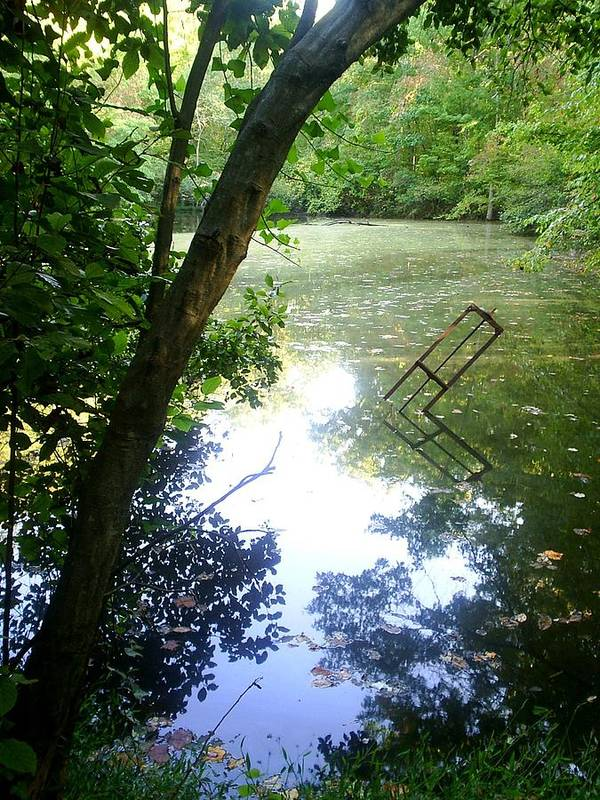 Pond Art Print featuring the photograph The Pond by Scarlett Royal