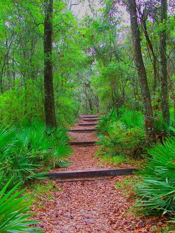 Green Art Print featuring the photograph The Way Up by Judy Waller