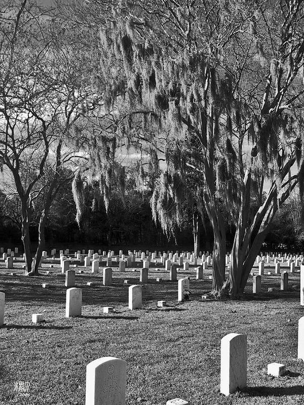 Cemetary Art Print featuring the photograph This Is War by Michele Caporaso
