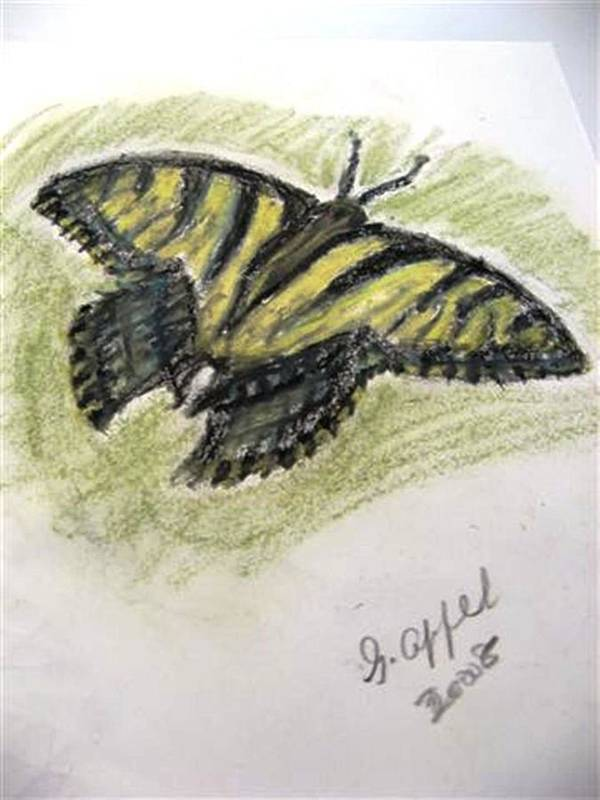 Tiger Butterfly Art Print featuring the drawing Tiger Butterfly by Gloria M Apfel