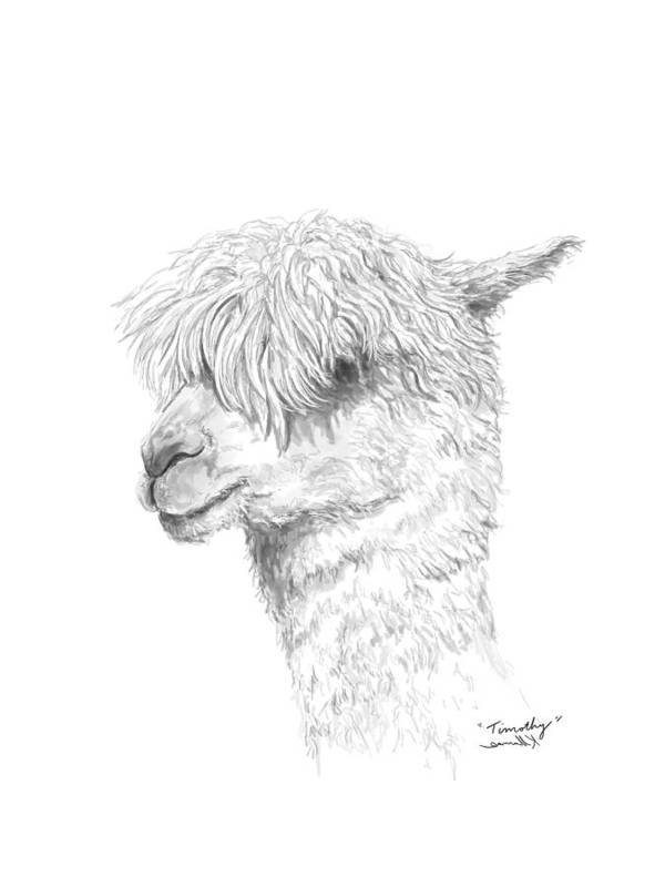 Llama Art Art Print featuring the drawing Timothy by K Llamas