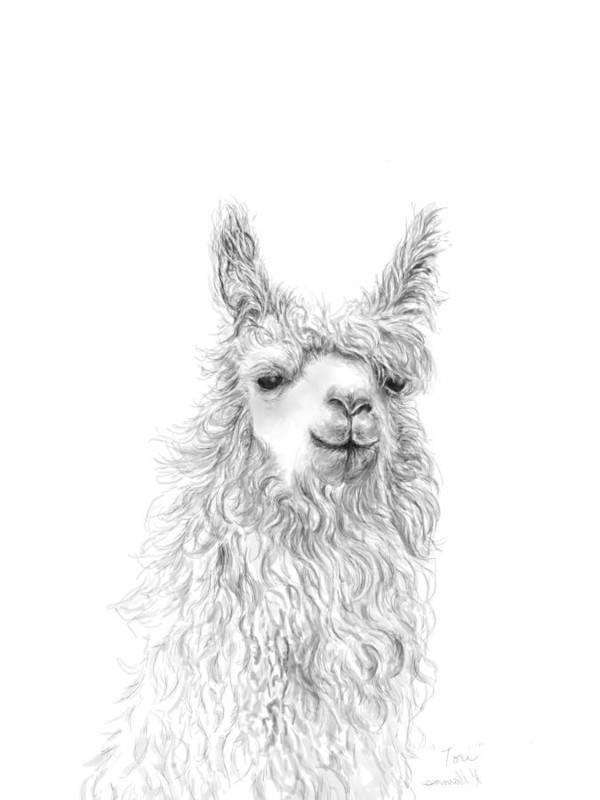 Llama Art Art Print featuring the drawing Tori by K Llamas